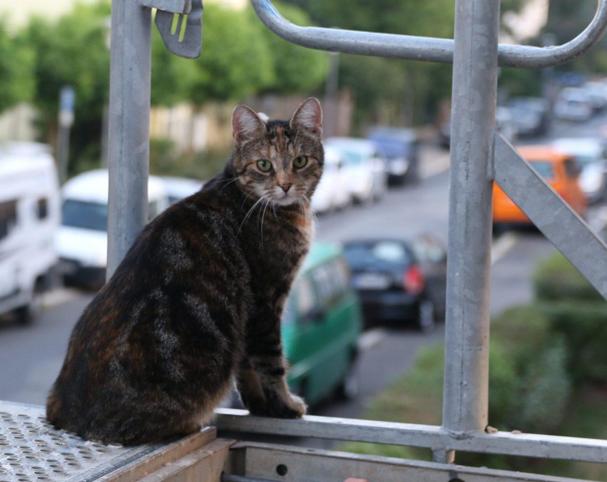 Katze sitzt auf Baugerüst